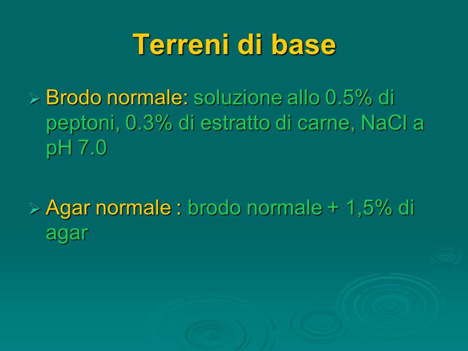 Terreni di base Brodo normale: soluzione allo 0.5% di peptoni, 0.3% di estratto di carne, NaCl a pH 7.0.