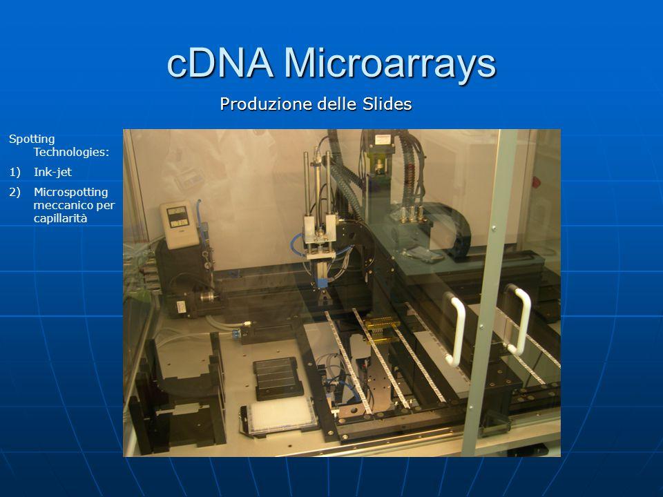 Produzione delle Slides