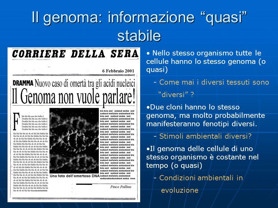 Il genoma: informazione quasi stabile