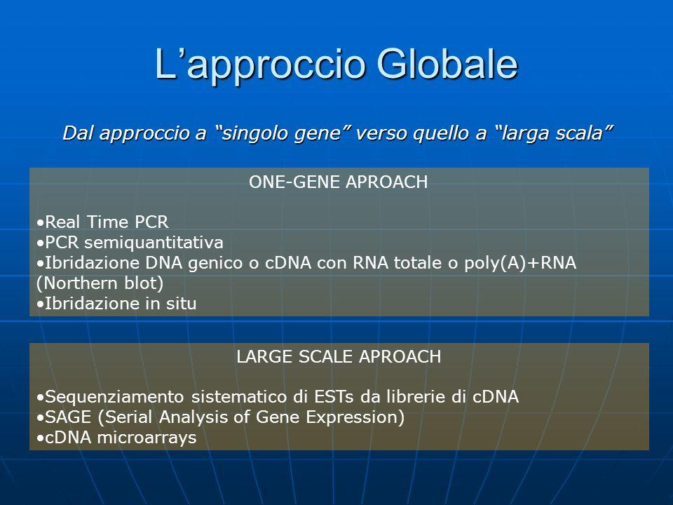 Dal approccio a singolo gene verso quello a larga scala