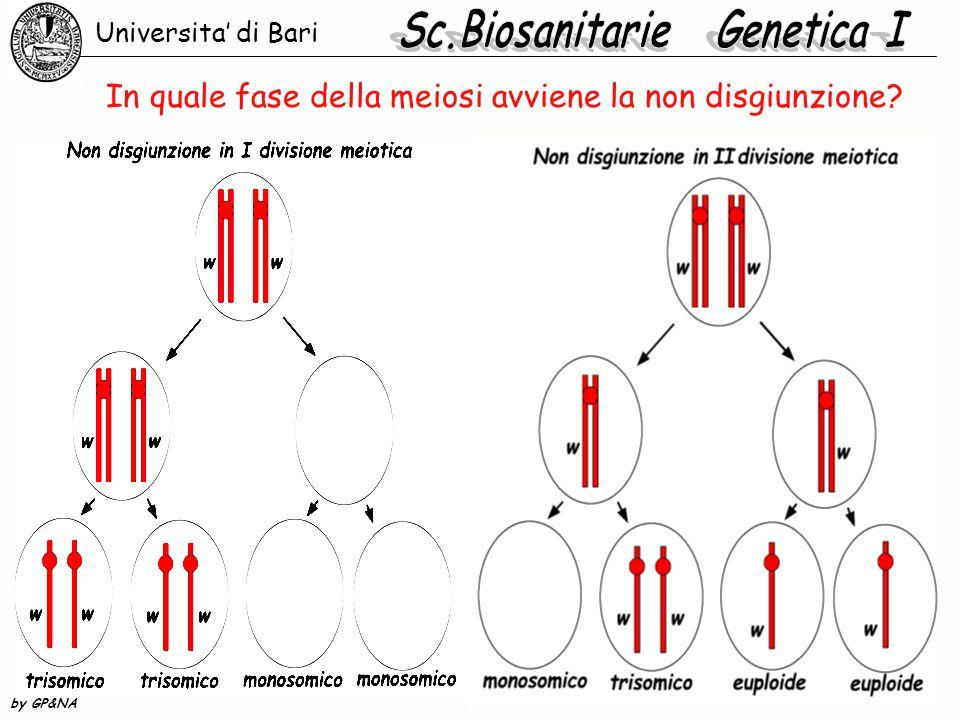 In quale fase della meiosi avviene la non disgiunzione