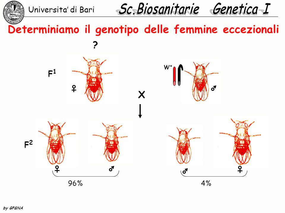 Determiniamo il genotipo delle femmine eccezionali