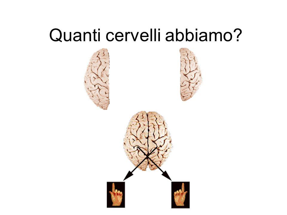 Quanti cervelli abbiamo
