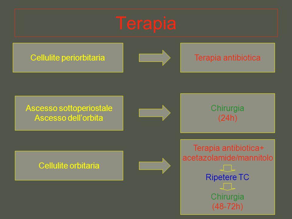 Terapia Cellulite periorbitaria Terapia antibiotica Chirurgia (24h)