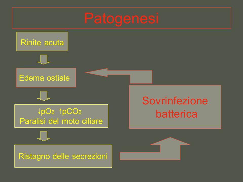 Patogenesi Sovrinfezione batterica Rinite acuta Edema ostiale pO2 pCO2
