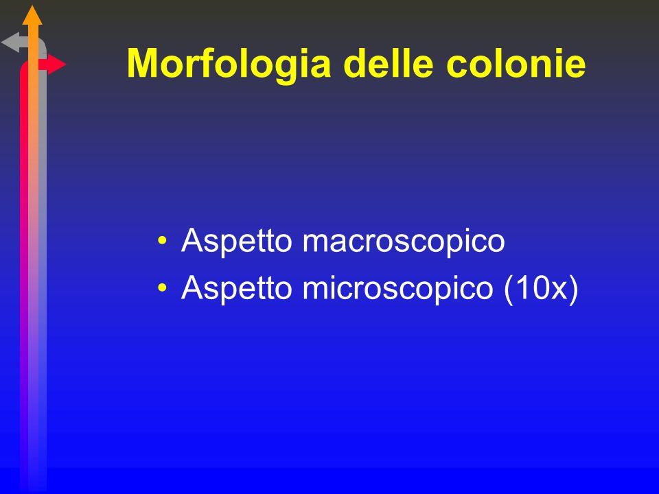 Morfologia delle colonie