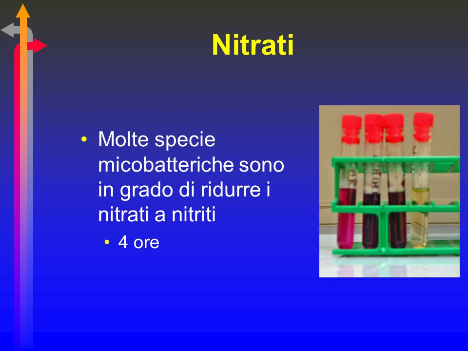 Nitrati Molte specie micobatteriche sono in grado di ridurre i nitrati a nitriti 4 ore