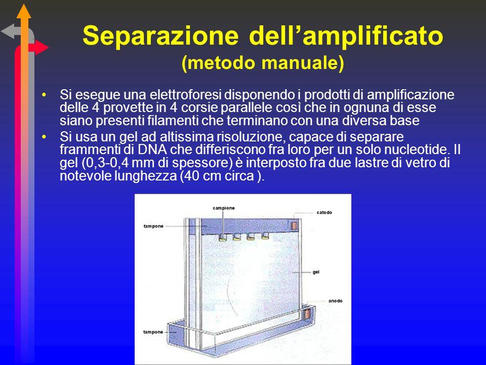 Separazione dell'amplificato (metodo manuale)