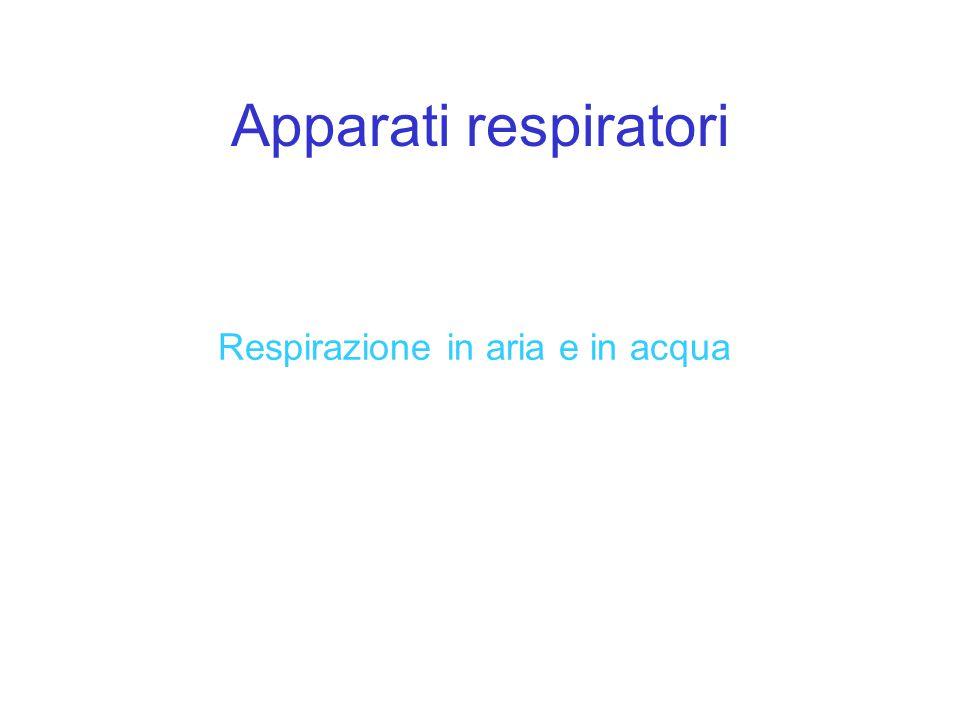 Apparati respiratori Respirazione in aria e in acqua