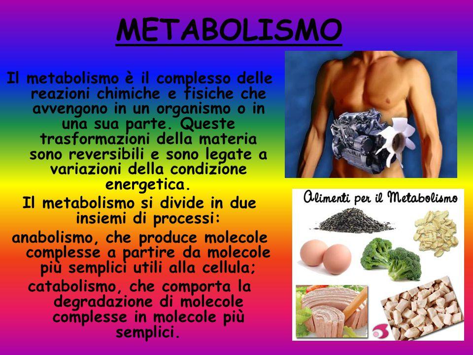 Il metabolismo si divide in due insiemi di processi: