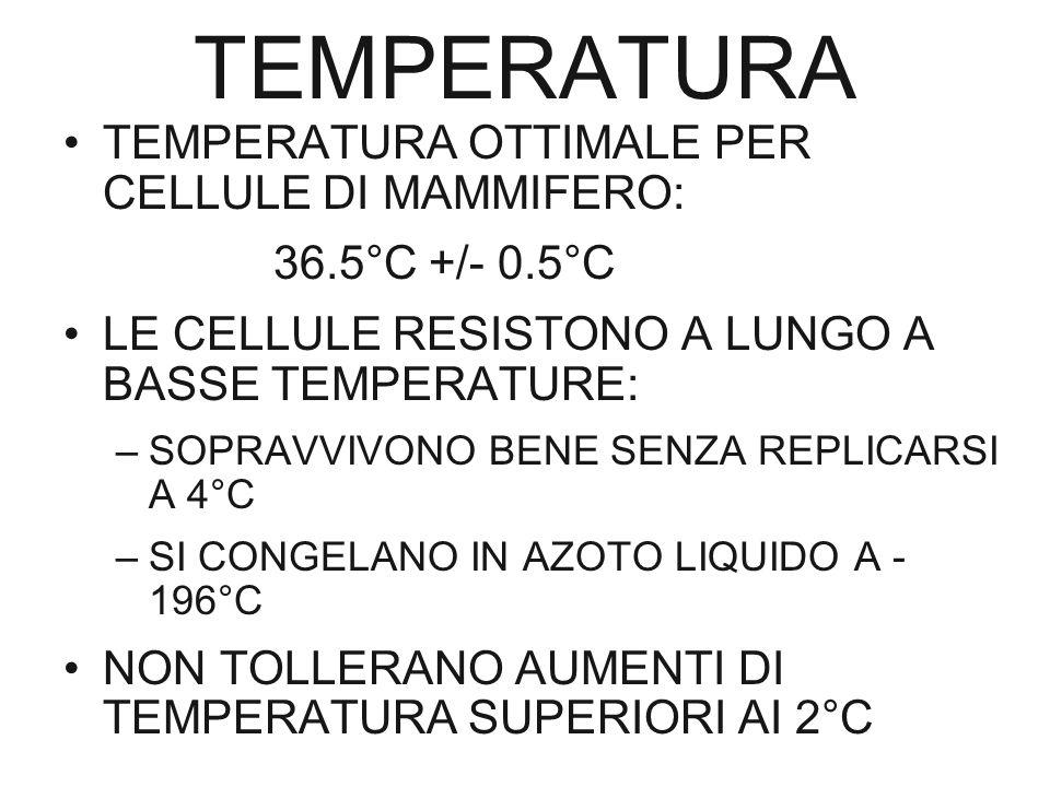 TEMPERATURA TEMPERATURA OTTIMALE PER CELLULE DI MAMMIFERO: