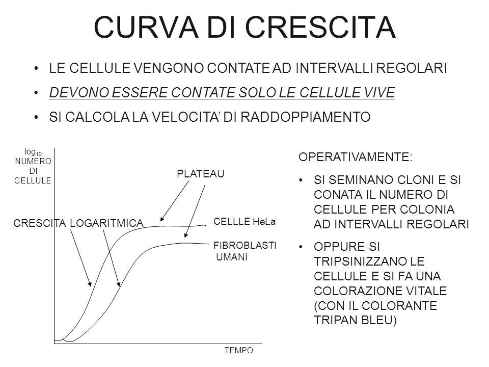 CURVA DI CRESCITA LE CELLULE VENGONO CONTATE AD INTERVALLI REGOLARI