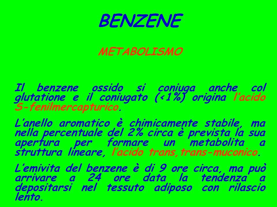 BENZENE METABOLISMO. Il benzene ossido si coniuga anche col glutatione e il coniugato (<1%) origina l'acido S-fenilmercapturico.