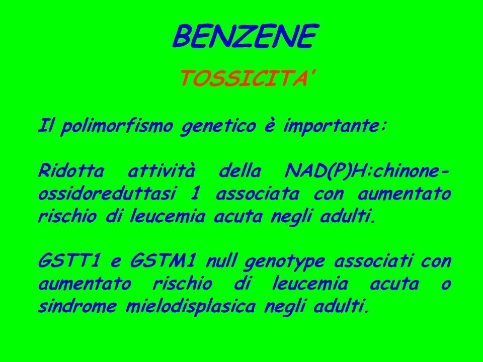 BENZENE TOSSICITA' Il polimorfismo genetico è importante: