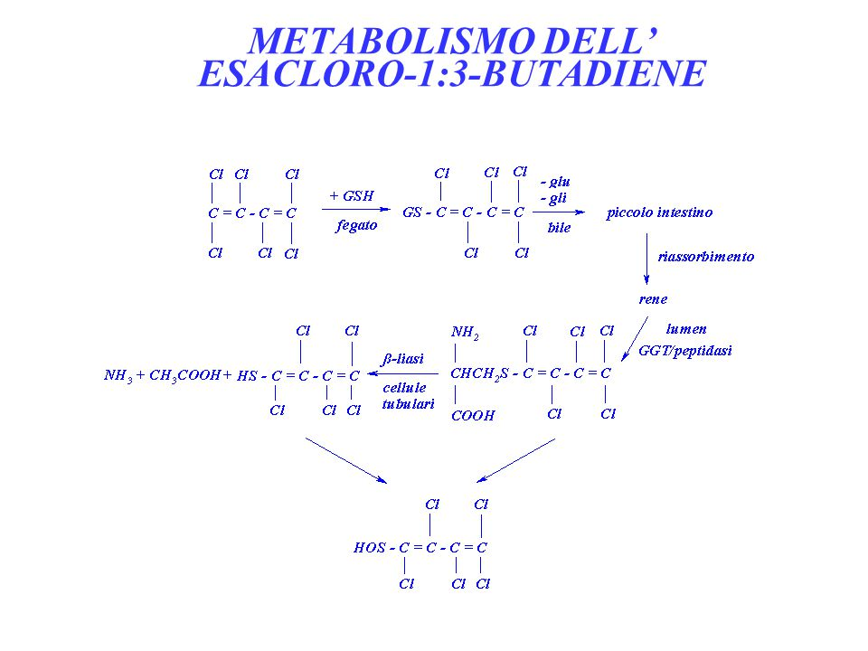 METABOLISMO DELL' ESACLORO-1:3-BUTADIENE