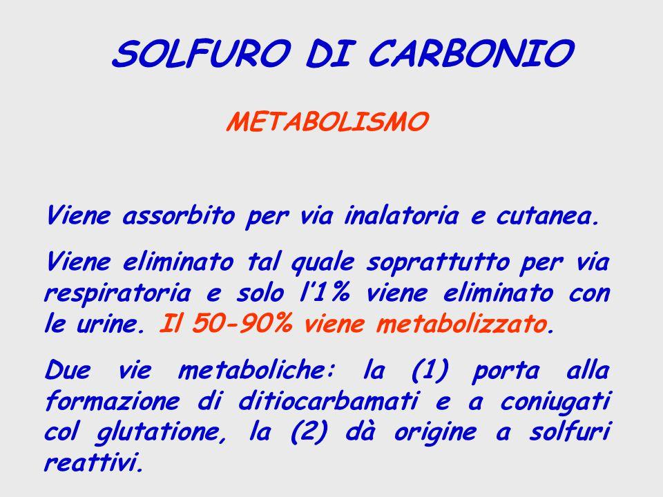 SOLFURO DI CARBONIO METABOLISMO