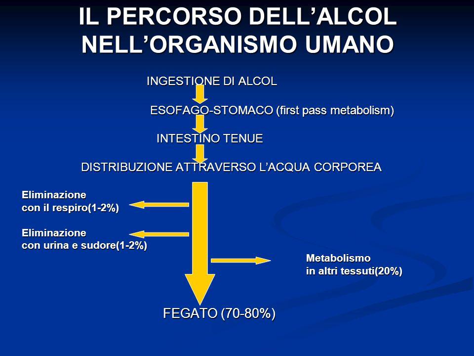 IL PERCORSO DELL'ALCOL NELL'ORGANISMO UMANO