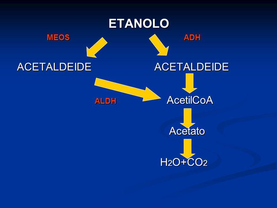 ETANOLO ACETALDEIDE ACETALDEIDE ALDH AcetilCoA Acetato H2O+CO2