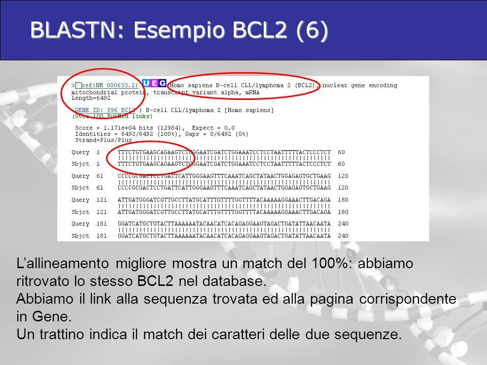 BLASTN: Esempio BCL2 (6)