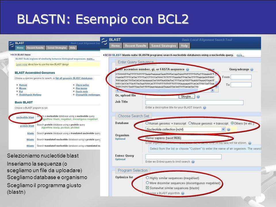 BLASTN: Esempio con BCL2