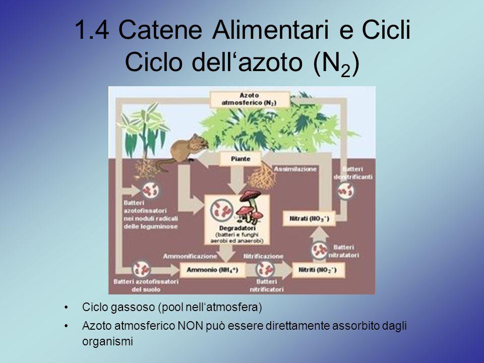 1.4 Catene Alimentari e Cicli Ciclo dell'azoto (N2)