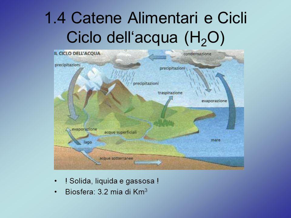 1.4 Catene Alimentari e Cicli Ciclo dell'acqua (H2O)