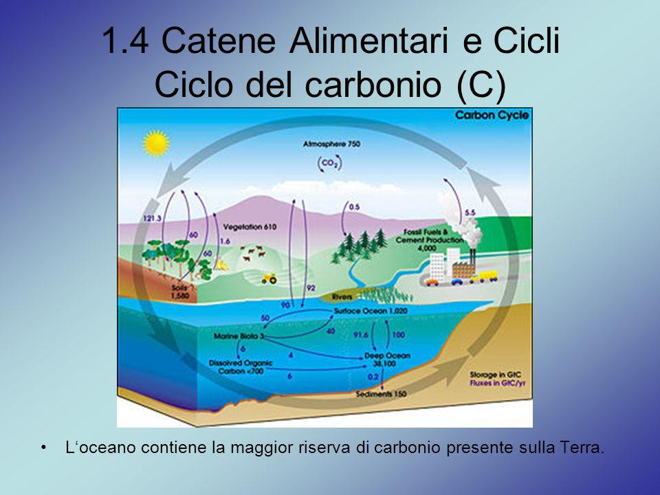 1.4 Catene Alimentari e Cicli Ciclo del carbonio (C)