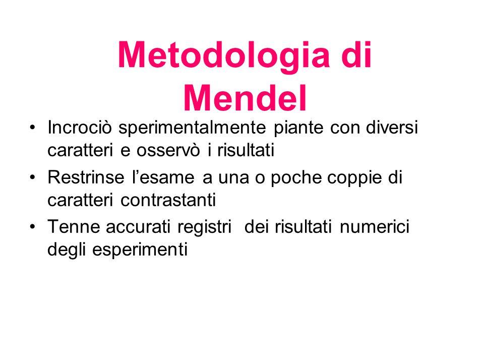 Metodologia di Mendel Incrociò sperimentalmente piante con diversi caratteri e osservò i risultati.