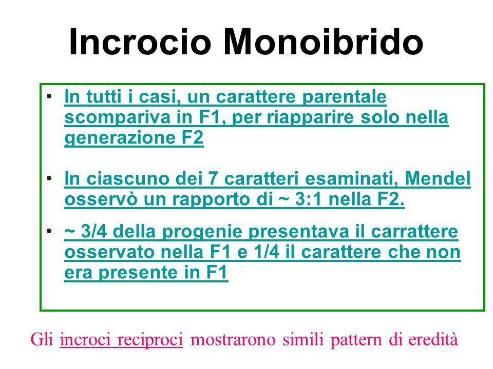 Incrocio Monoibrido In tutti i casi, un carattere parentale scompariva in F1, per riapparire solo nella generazione F2.