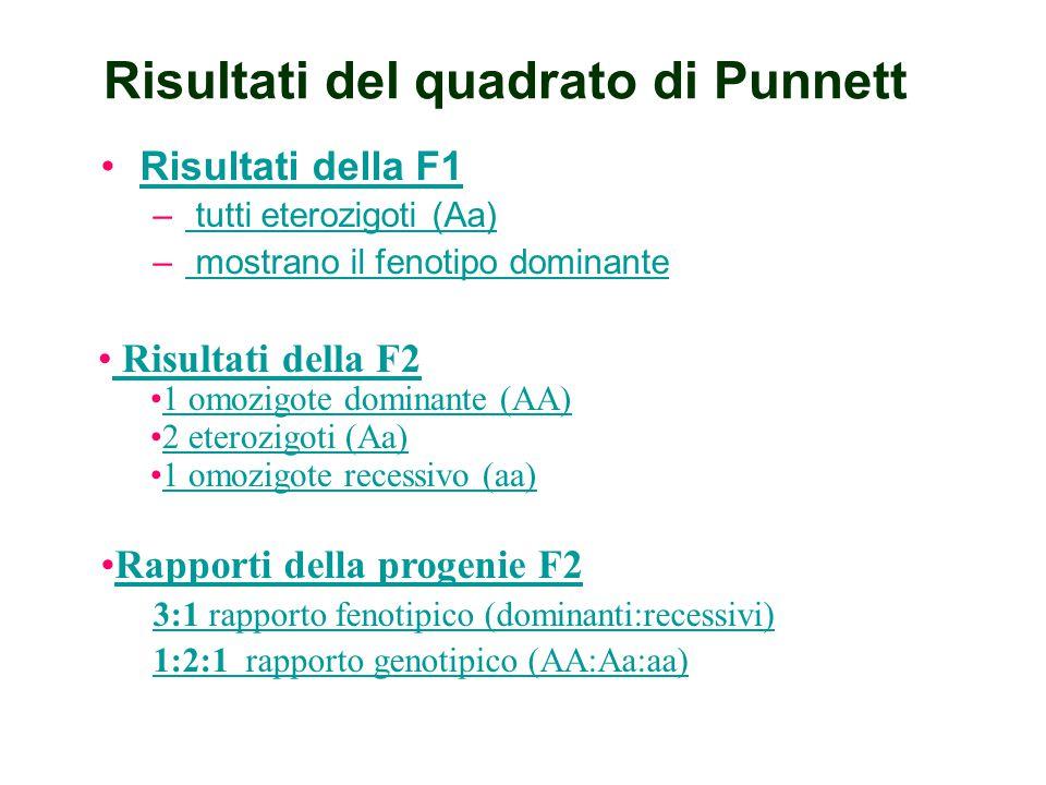Risultati del quadrato di Punnett