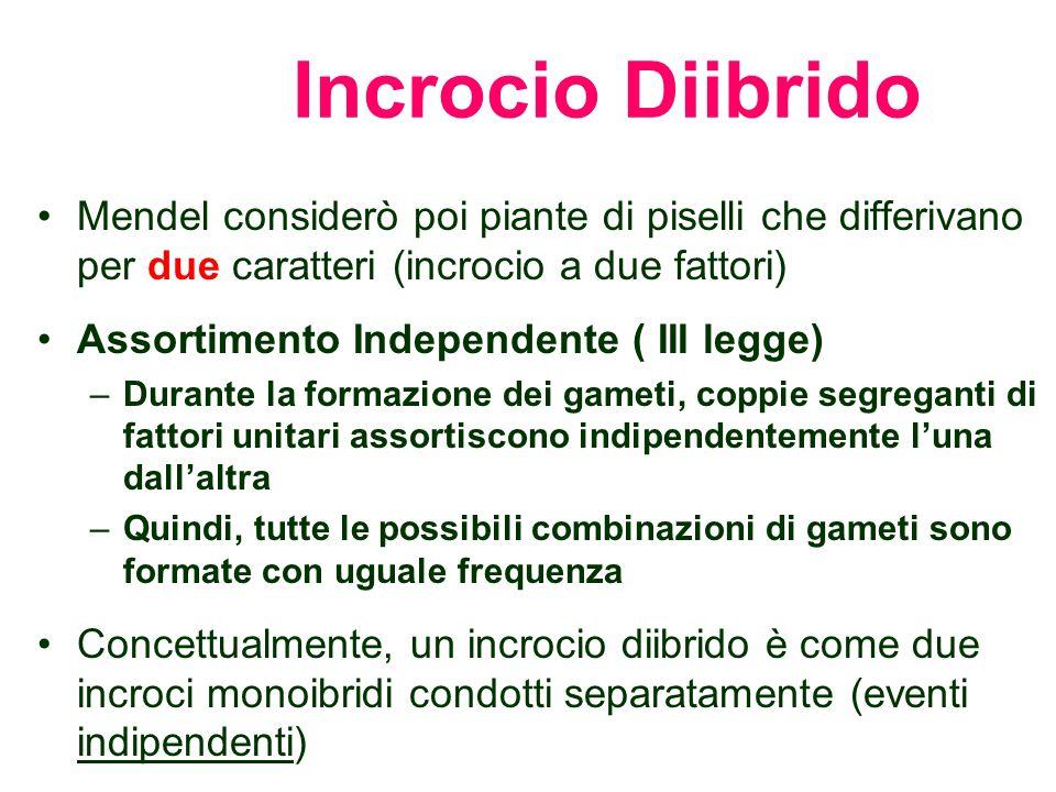 Incrocio Diibrido Mendel considerò poi piante di piselli che differivano per due caratteri (incrocio a due fattori)