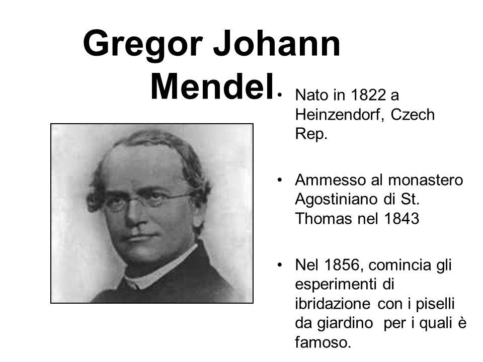 Gregor Johann Mendel Nato in 1822 a Heinzendorf, Czech Rep.