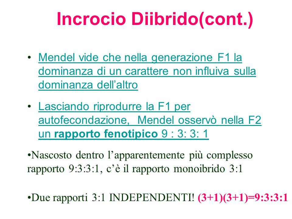 Incrocio Diibrido(cont.)