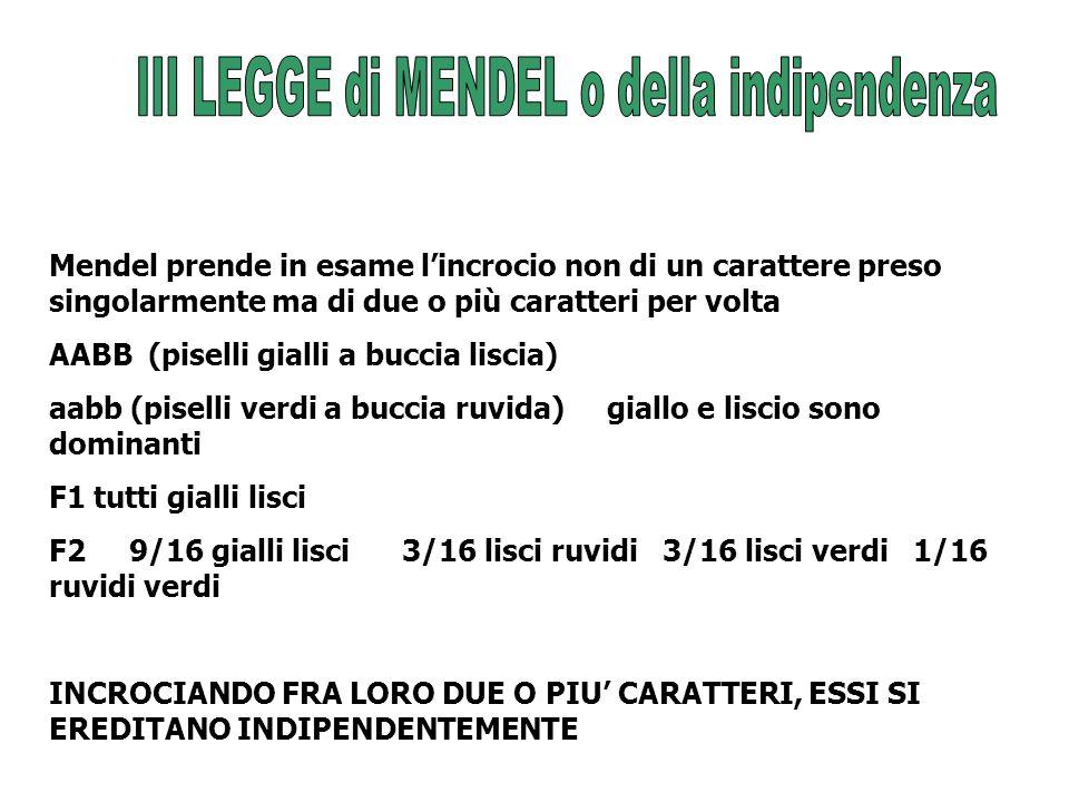 III LEGGE di MENDEL o della indipendenza