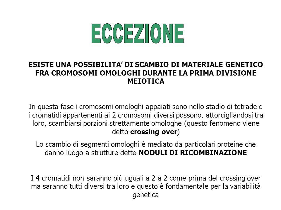 ECCEZIONE ESISTE UNA POSSIBILITA' DI SCAMBIO DI MATERIALE GENETICO FRA CROMOSOMI OMOLOGHI DURANTE LA PRIMA DIVISIONE MEIOTICA.