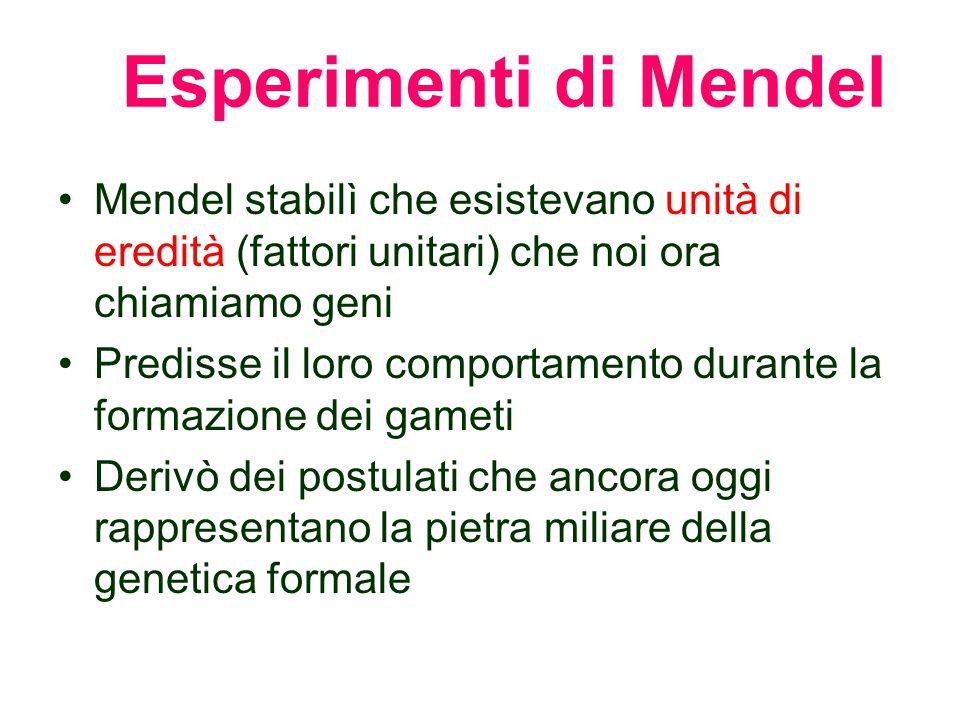 Esperimenti di Mendel Mendel stabilì che esistevano unità di eredità (fattori unitari) che noi ora chiamiamo geni.