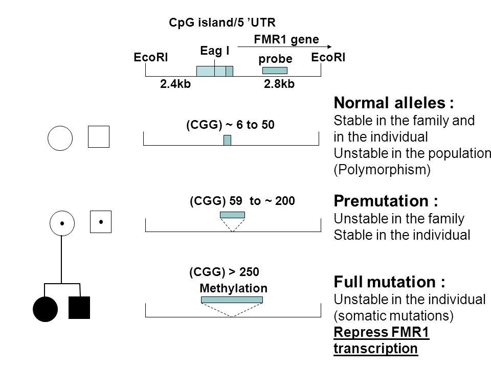 Normal alleles : Premutation : Full mutation :