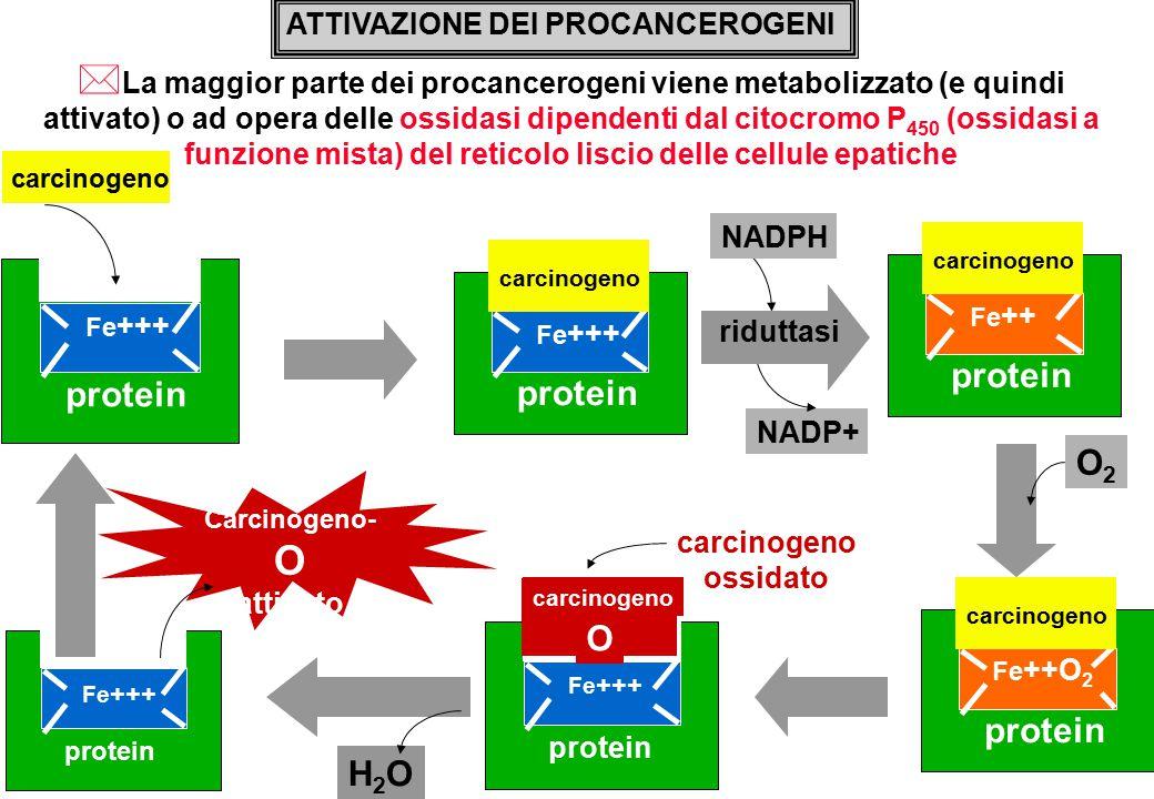 protein protein protein O2 O protein H2O