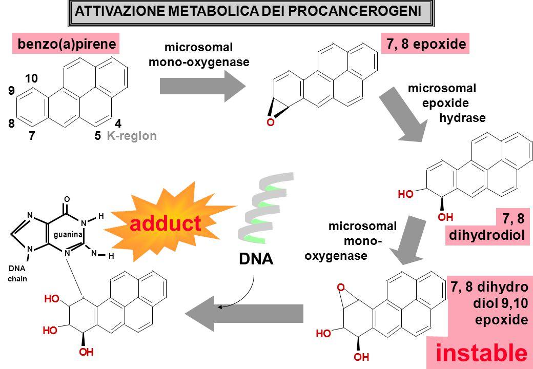 instable adduct DNA ATTIVAZIONE METABOLICA DEI PROCANCEROGENI