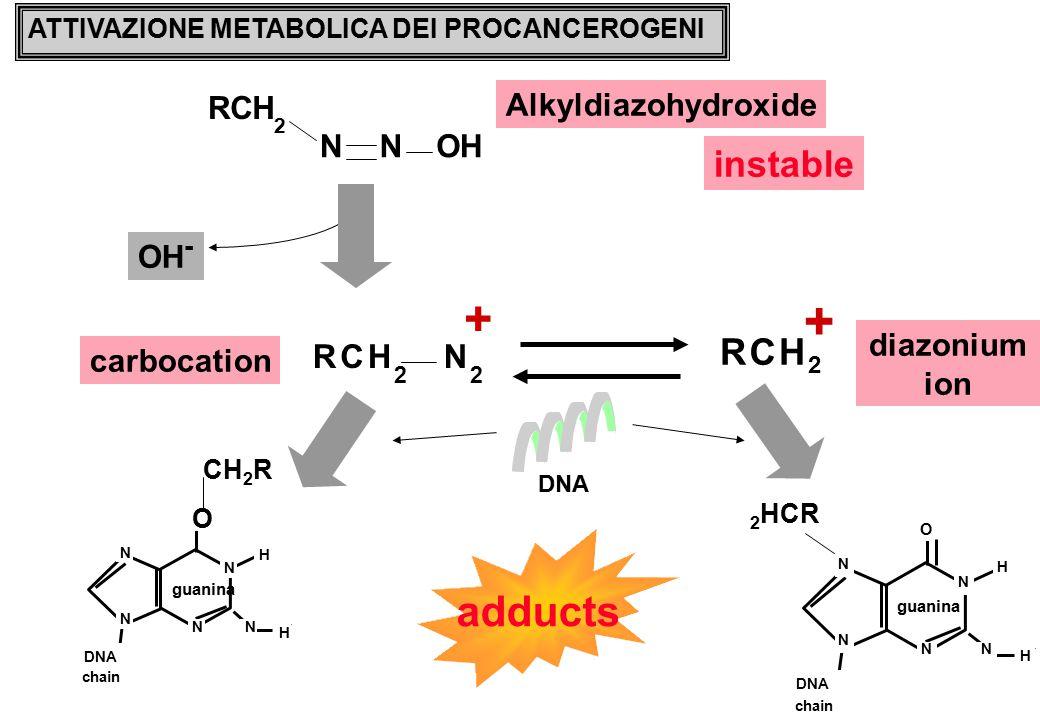 + + adducts instable R C H R C H N N R C H O Alkyldiazohydroxide OH-