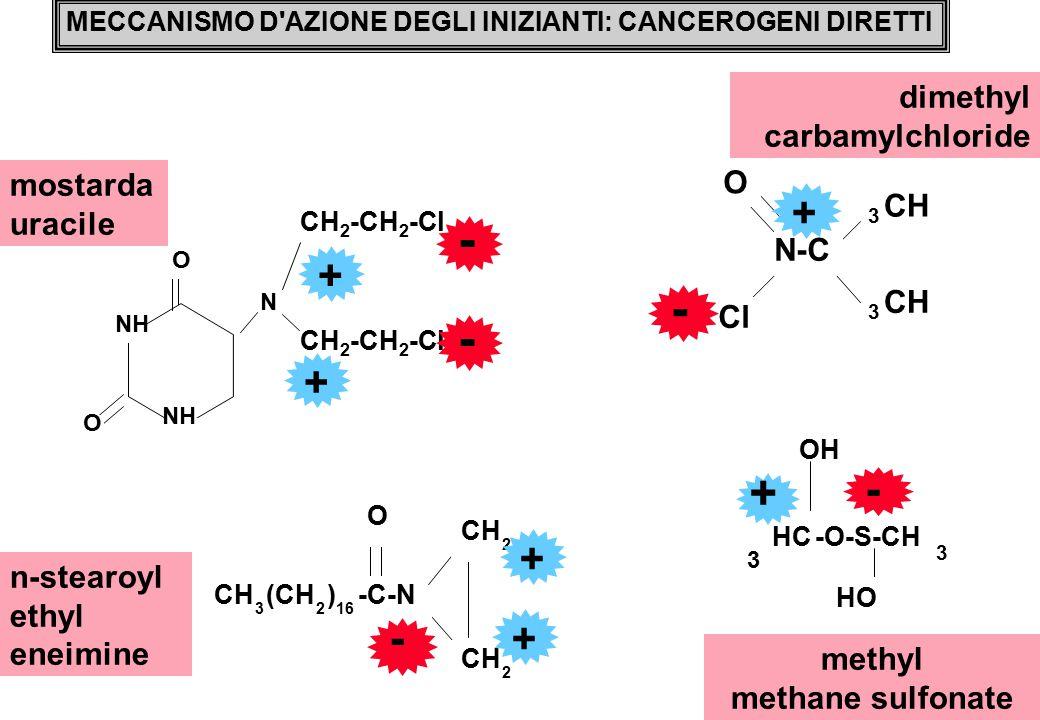 - - + - - + + + dimethyl carbamylchloride O mostarda uracile CH N-C Cl