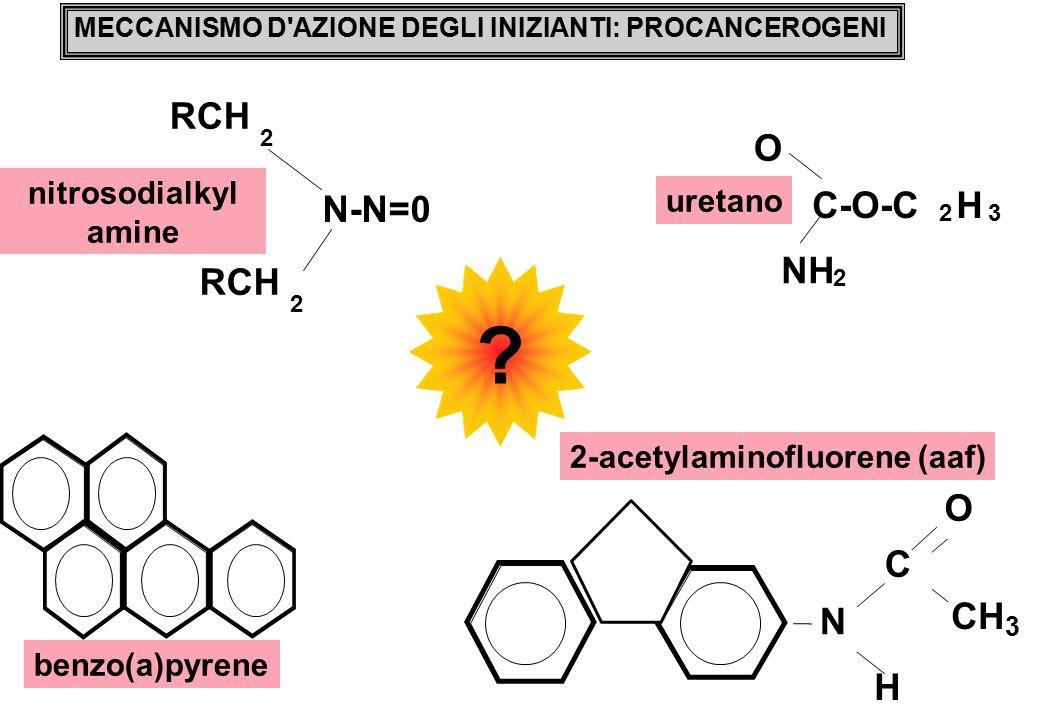 N-N=0 RCH NH O C-O-C H H O C CH N nitrosodialkyl uretano amine
