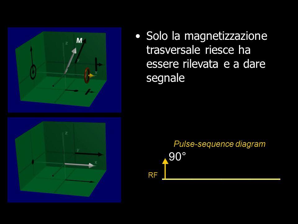 Solo la magnetizzazione trasversale riesce ha essere rilevata e a dare segnale