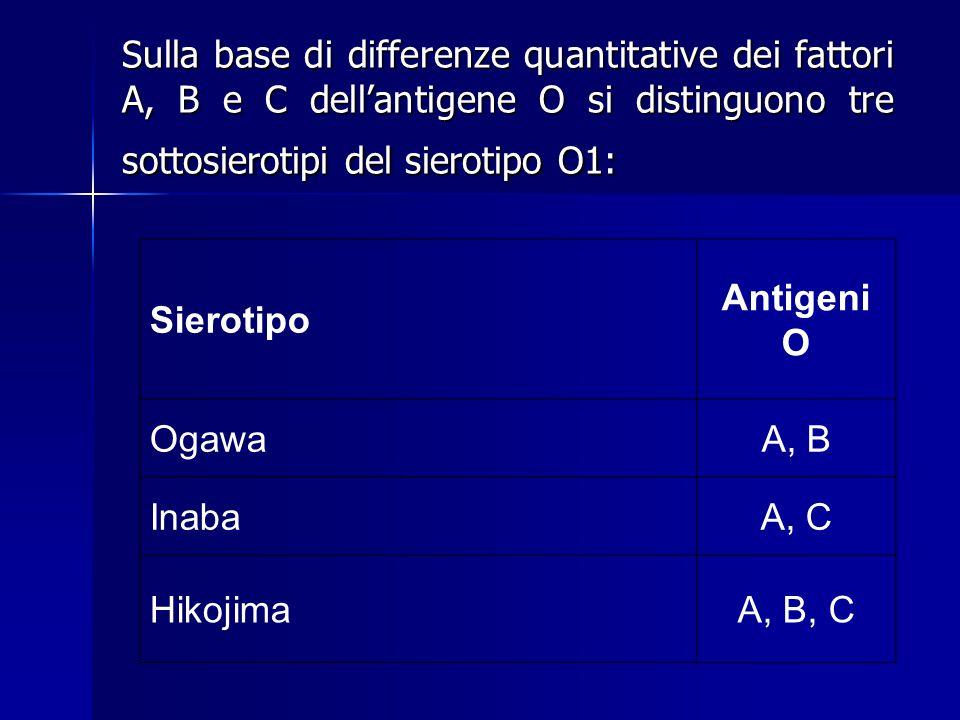 Sulla base di differenze quantitative dei fattori A, B e C dell'antigene O si distinguono tre sottosierotipi del sierotipo O1: