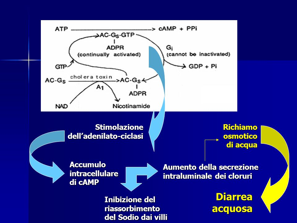 Diarrea acquosa Stimolazione dell'adenilato-ciclasi