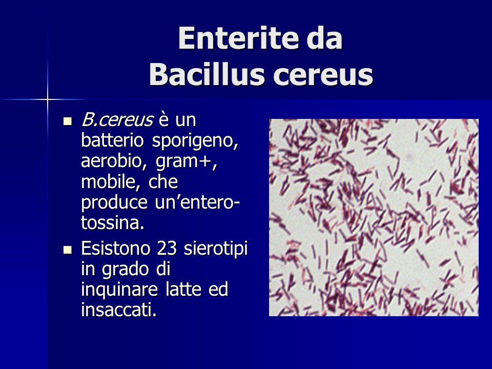 Enterite da Bacillus cereus