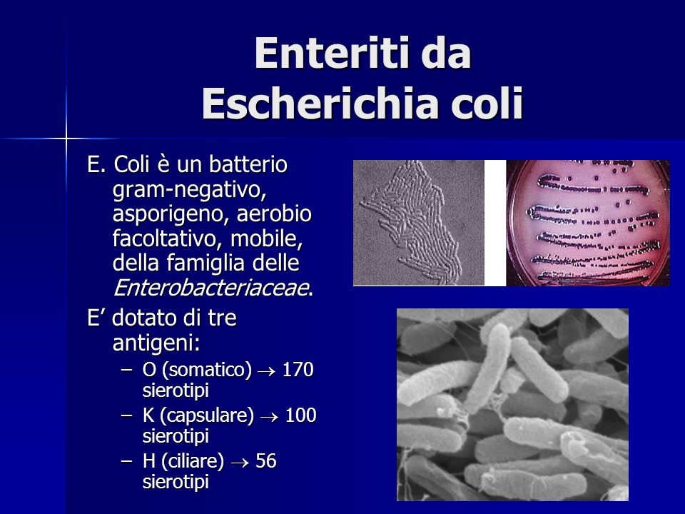 Enteriti da Escherichia coli