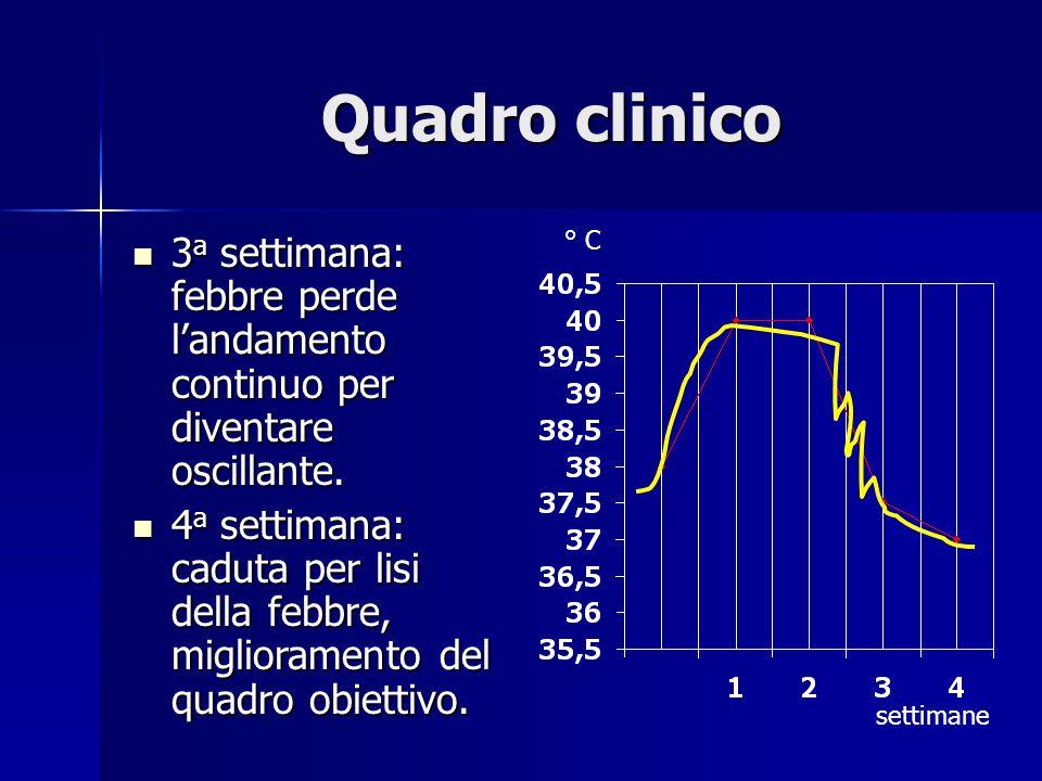 Quadro clinico ° C. 3a settimana: febbre perde l'andamento continuo per diventare oscillante.