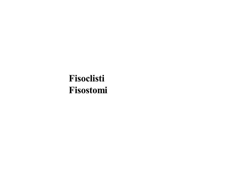 Fisoclisti Fisostomi