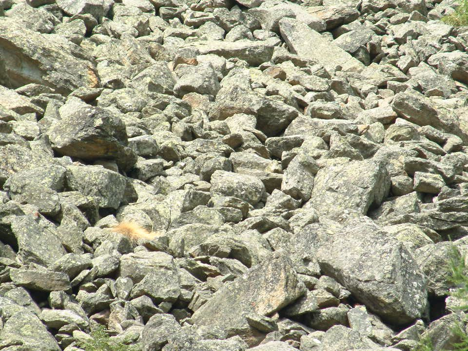 Valnontey ghiaione Ghiaioni morenici prodotti dal ritiro dei ghiacciai.